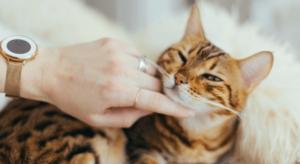 Tatuaże koty – znaczenie oraz popularne wzory
